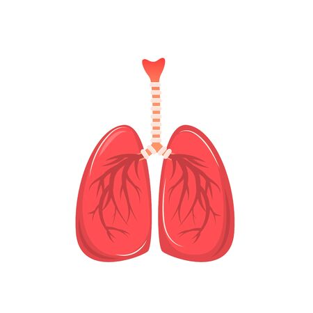 Cartoon human lungs isolated on a white background. Vector illustration in flat style Иллюстрация