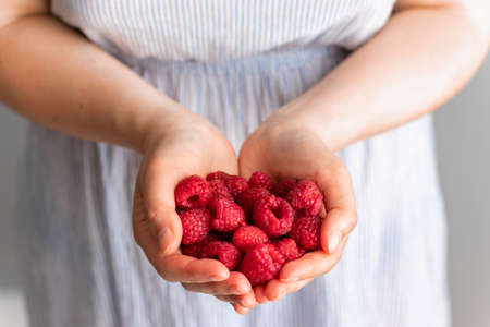 Woman hands holding fresh red raspberries on grey background. Freshly harvest. Healthy eating, dieting fruits, close up