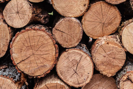 Wooden logs of pine woods, stacked in a pile.