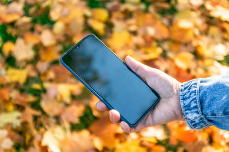 Woman hand holding mobile smartphone with empty screen outdoors against autumn fall forest Standard-Bild