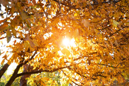 Beautiful autumn leaves trees in the park in the sun. Colorful autumn landscape