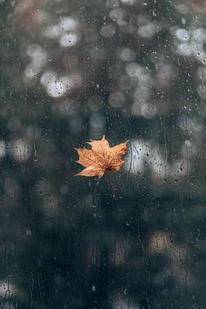 Drops of rain and maple leaf on the wet window glass 版權商用圖片 - 158085974