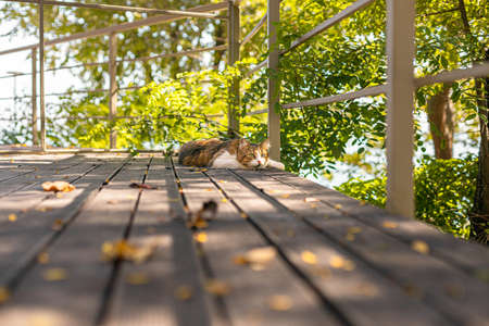 Fluffy tabby cat resting on wooden veranda in summer with copy space. Rest and relaxation concept