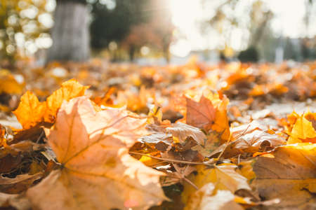 Closeup of autumn leaves on the ground in a forest. Autumn colorful background 版權商用圖片 - 158308695