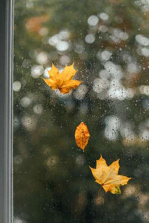 Three yellow autumn leaves on a wet window. Autumn rainy weather, sadness concept