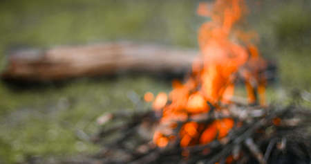 Bonfire in the forest. Shallow depth of field Stok Fotoğraf