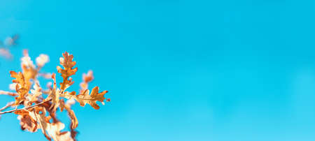 Beautiful autumn landscape with colorful foliage on blue sky. Colorful background, fall backdrop