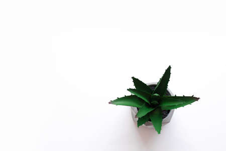 Minimalistic green succulent plant in a concrete pot on a white background. Flat lay, top view, creative copy space.