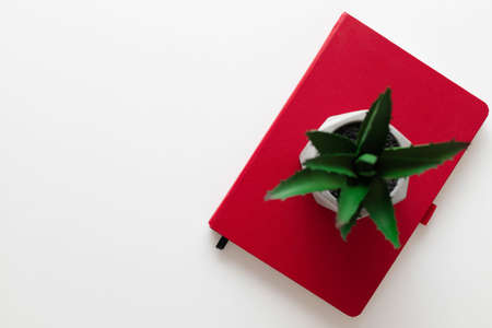 Flat lay of red notebook, green eco plant on a white plain minimalistic background with copy space. Freelance office workplace work concept