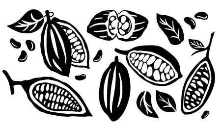 Cocoa pod and many raw beans set isolated on white background. 向量圖像