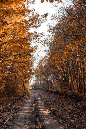 Beautiful autumn forest road in the rays of sunlight. Fallen orange and yellow carpet leaves in november forest