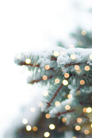 Christmas and New Year holiday background. Evergreen green spruce branches with festive lights garland decor blurred in bokeh with copyspace. Christmas mood. White snow lies on the branches of a Christmas tree
