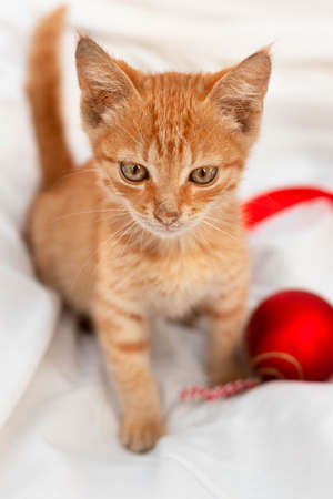 Small brown kitten with a red toy sits on white blanket