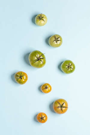Tomatoes of different ripeness on a blue background. Unripe tomato vegetable