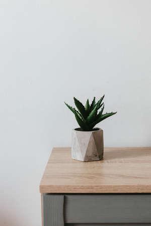 Succulent plant in gray concrete pot on a tree table in a room minimal interior 版權商用圖片