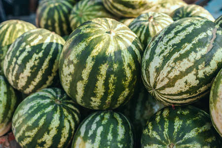 Large ripe watermelons on the market. Fresh organic fruits