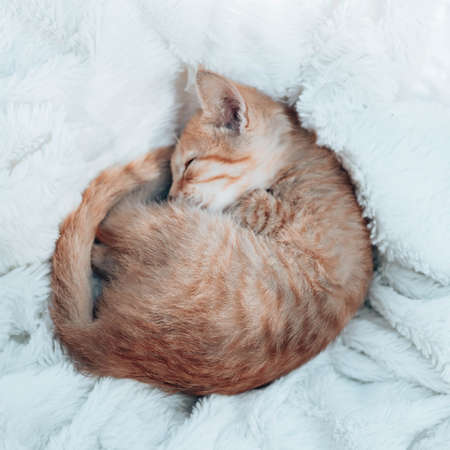 Small ginger kitten sleeps on a soft blanket on the sofa in the living room. The pet sleeps at home. Vertical photo orientation Zdjęcie Seryjne