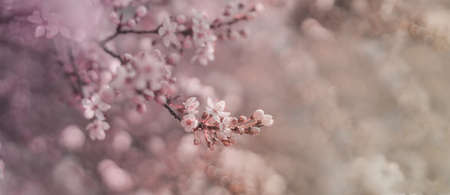 Beautiful spring nature scene with pink blooming tree in sunlight.