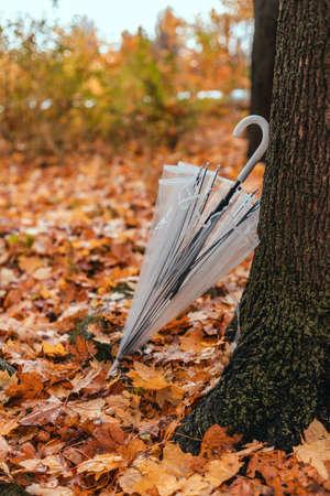 Transparent umbrella left near an autumn tree in a city park