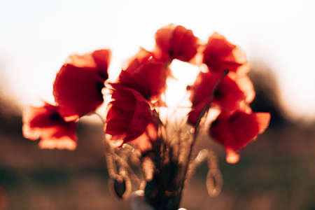 Red poppy flowers against the sky. Shallow depth of field Banque d'images