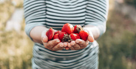 Female hands with a ripe strawberries. Healthy rural organic harvest in the garden. Woman hands holding ripe juicy strawberries.
