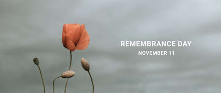 Poppy day. Red poppies in the field in the sky. Memorial Day, Horizontal banner Banque d'images