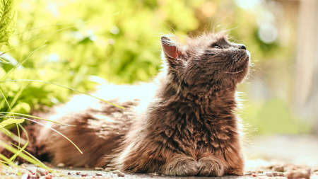 Portrait of a fluffy gray cat with yellow eyes in nature and looks around in the spring garden Banque d'images