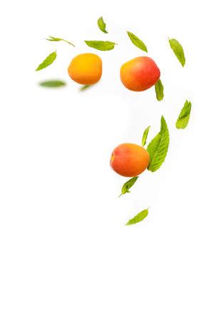 Random flying in the air green mint leaves with juicy ripe apricot fruits isolated on white background. Empty space. Ripe fruit in flight