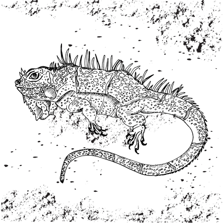 L'iguana è grande. Rettili. Illustrazione vettoriale isolato. Perfetto per il design di magliette o t-shirt, logo del marchio, tatuaggi e decorazioni Logo