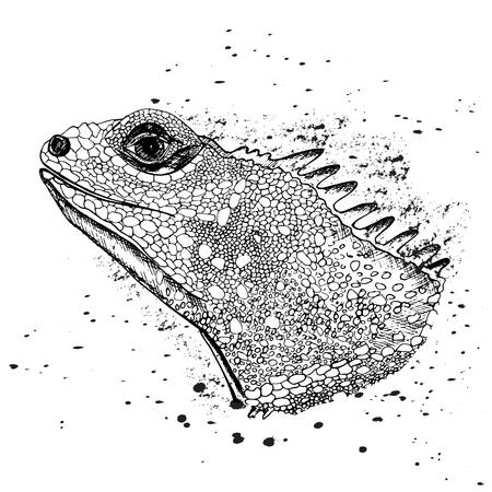 La tête de l'iguane. Reptiles. Illustration vectorielle isolée. Parfait pour la conception de chemises ou de t-shirts, le logo de la marque, le tatouage et la décoration Logo
