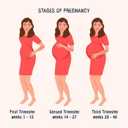 Mujer embarazada en diferentes trimestres del embarazo. Ilustración de vector de una niña con un vientre