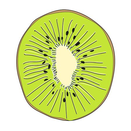 Kiwi Summer bright fruit. Modern graphics. The concept of healthy and healthy food. Vector illustration.