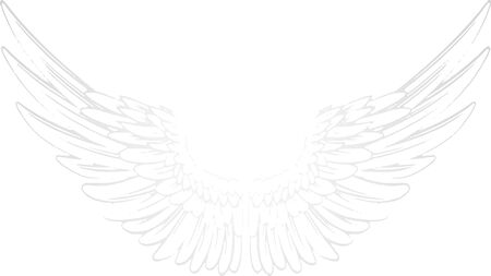white background with pair of wings. Angel wings