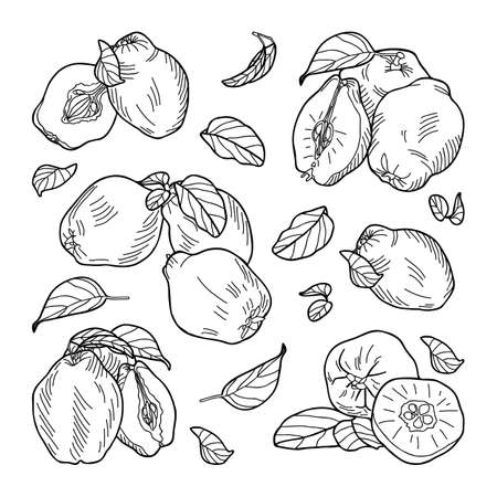 Composition of quince fruits: whole, halves, leaves. Hand-drawn vector illustration.