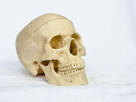 homogeneous: The image of a skull of the person on a homogeneous background Stock Photo