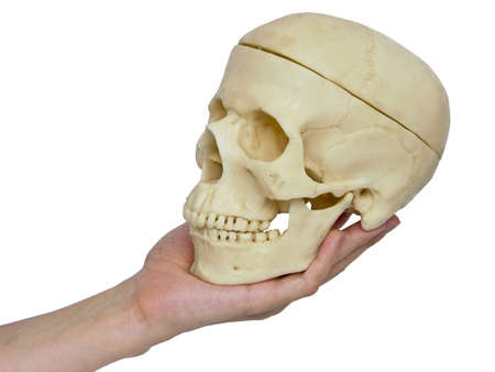 homogeneous: The image of the hand holding a skull on a homogeneous background Stock Photo