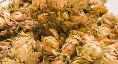 soporific: Dry cones of hop
