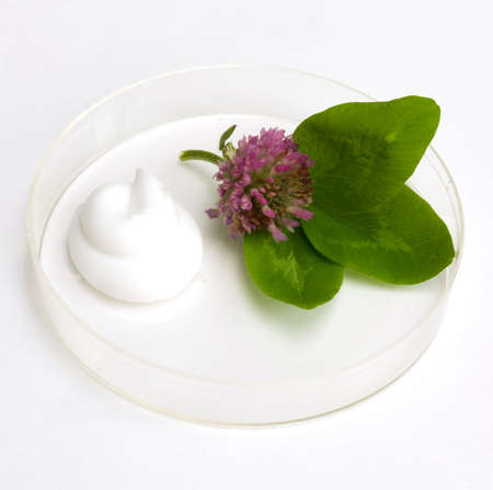 the cream and herb image in a glass saucer photo
