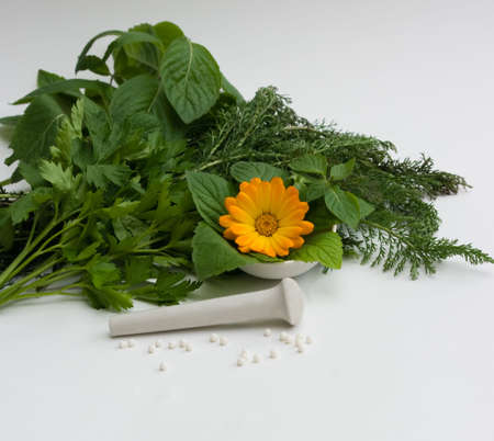 homoeopathic: the Image of medicinal grasses and flowers Stock Photo