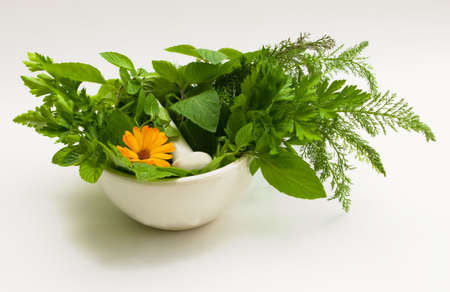the Image of medicinal grasses and flowers Stock Photo - 3879729