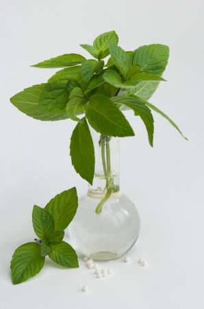 the Image of homoeopathic peas and a herb in a flask Stock Photo