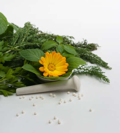 the Image of medicinal grasses and flowers Stock Photo - 3879758