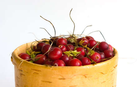 bactericidal: the cranberry Image in a vessel from a birch bark