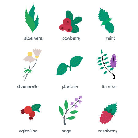 aloe vera plant: Colorful icon set - medical herbs and berries. Flat vector illustration.
