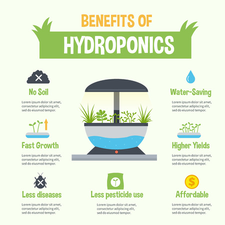 Hydroponics benefits infographic. Vector hydroponic gardening illustration. Infographic element and icons.