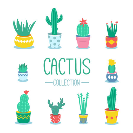 potted plant cactus: Cactuses and houseplants in pots. Vector cartoon illustration. Illustration