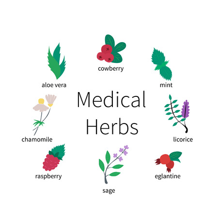eglantine: Colorful icon set - medical herbs and berries. Flat vector illustration.