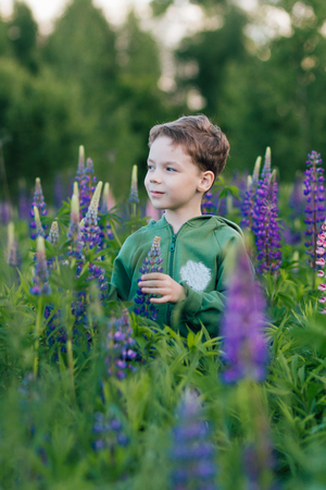 Portrait of a boy in a summer field of lupine in cloudy weather. Toning. Stock Photo