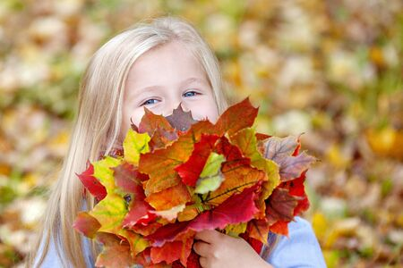 A small, fair-haired, blue-eyed girl looks out cheerfully from behind a bouquet of bright autumn leaves. Has a good time in the fresh air. Close up