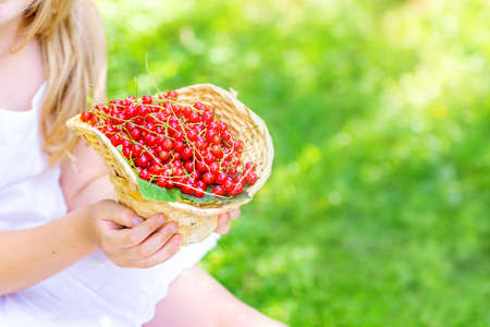 Close-up of children's hands holding a basket of red currants. There is a free space on the right for copy space